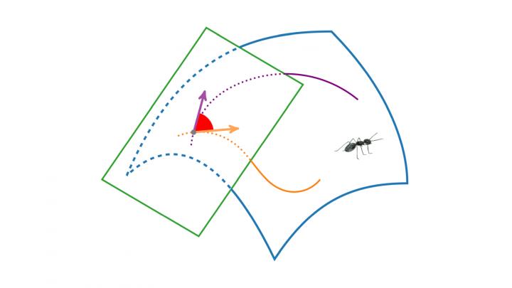 DG 2019-06-11 05 Winkel zwischen Kurven in regulären Flächen