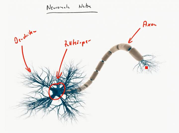 MINF 2016-05-24 01 Künstliche Neuronen